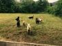 Primo ritrovo delle pecore nere